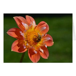 Honeybee on orange dahlia card