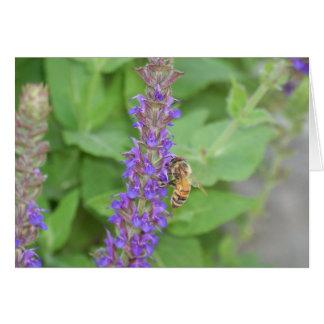 Honeybee on Salvia Officinalis Card