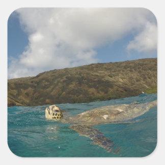 Honu- Hawaii Turtle Square Sticker
