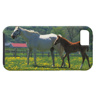 Horse and her foal standing in a field iPhone 5 cover