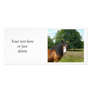 Horse beautiful photo custom rack card