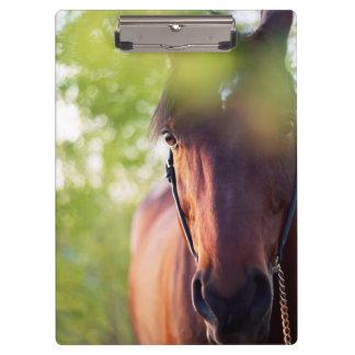 horse collection. spring clipboard