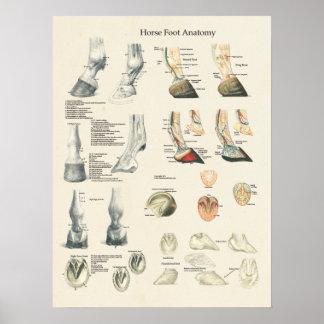 Horse Foot Hoof Leg Anatomy Farrier Chart Poster