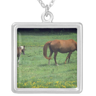 Horse grazing in pasture with colt. silver plated necklace