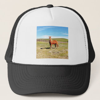 Horse in front of a Napa Vineyard Trucker Hat