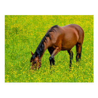 Horse in the Meadow - Postcard