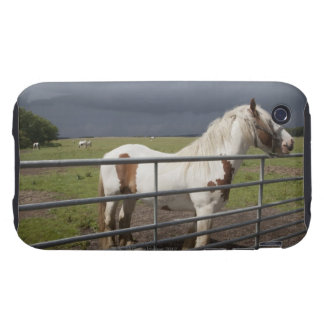 Horse near a fence tough iPhone 3 covers