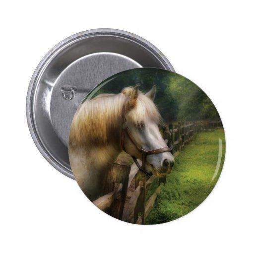 Horse - White Stallion Pinback Buttons