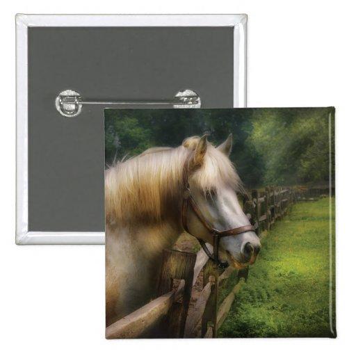 Horse - White Stallion Button