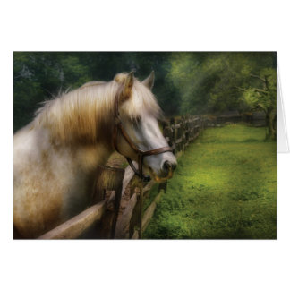 Horse - White Stallion Greeting Card