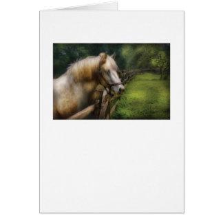 Horse - White Stallion Greeting Cards