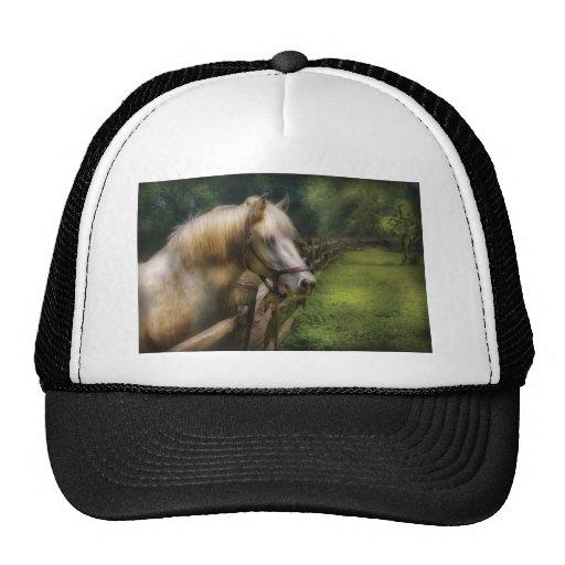 Horse - White Stallion Hats
