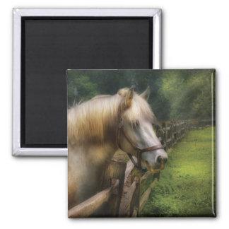 Horse - White Stallion Refrigerator Magnet