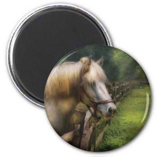Horse - White Stallion Fridge Magnet