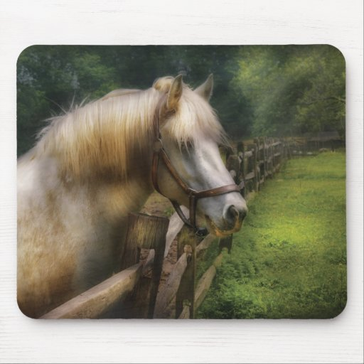 Horse - White Stallion Mouse Pads
