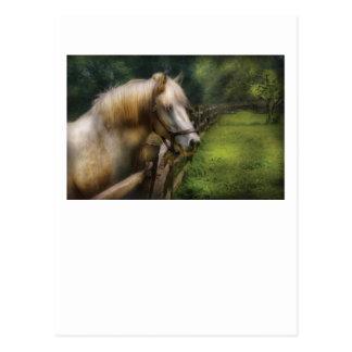Horse - White Stallion Post Card