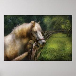 Horse - White Stallion Print