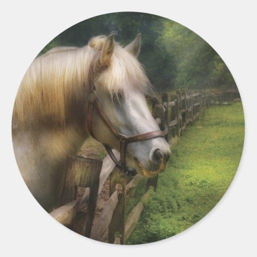 Horse - White Stallion Sticker