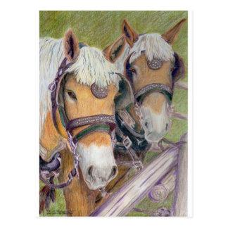 Horses - A Matched Pair Postcard