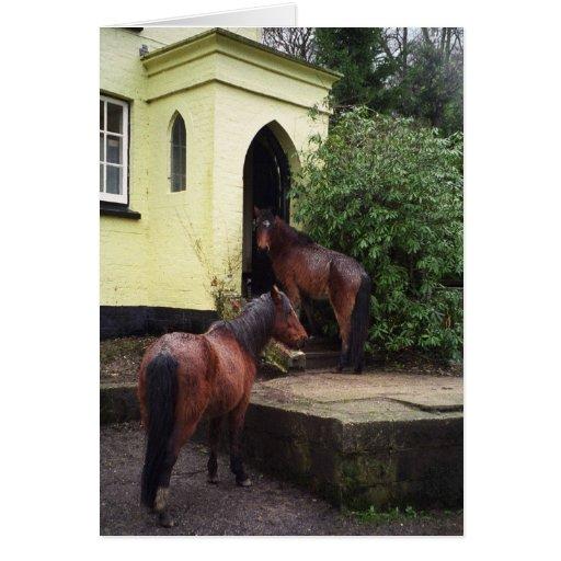 Horses at a pub greeting cards