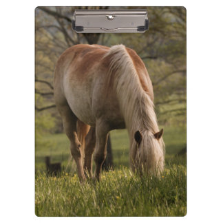 Horses grazing in meadow, Cades Cove, Great 3 Clipboard