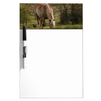 Horses grazing in meadow, Cades Cove, Great 3 Dry-Erase Whiteboard
