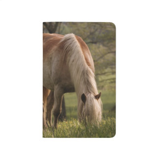 Horses grazing in meadow, Cades Cove, Great 3 Journal