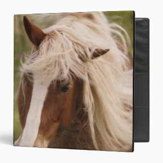 Horses grazing in meadow, Cades Cove, Great 3 Ring Binder