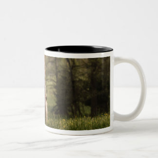 Horses grazing in meadow, Cades Cove, Great 3 Two-Tone Mug
