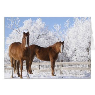 Horses in Winter Card
