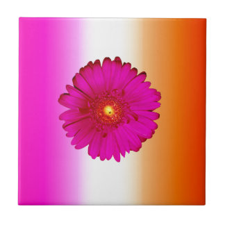 Hot Pink Gerbera Daisy on Pink Orange Tile