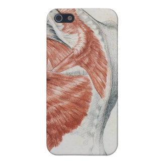 Human Anatomy; Muscles of the Torso and Shoulder Case For iPhone 5/5S