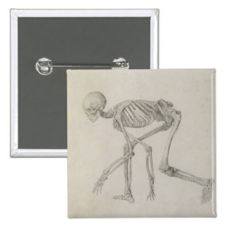 Human Skeleton: Lateral view in Crouching Posture, 15 Cm Square Badge