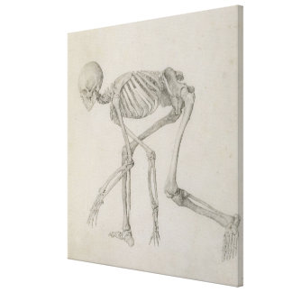 Human Skeleton: Lateral view in Crouching Posture, Canvas Print