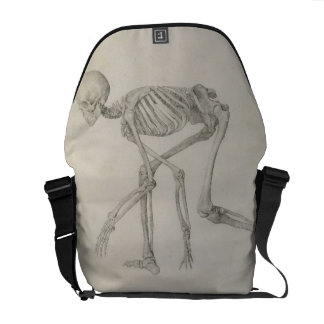 Human Skeleton: Lateral view in Crouching Posture, Courier Bags