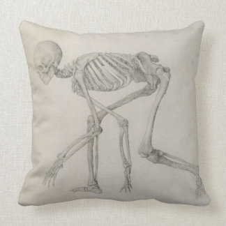 Human Skeleton: Lateral view in Crouching Posture, Cushions
