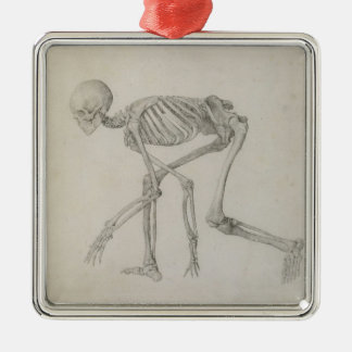 Human Skeleton: Lateral view in Crouching Posture, Silver-Colored Square Decoration
