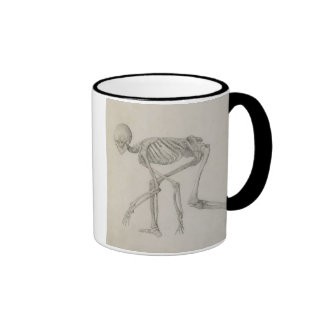 Human Skeleton: Lateral view in Crouching Posture, Ringer Mug