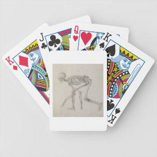 Human Skeleton: Lateral view in Crouching Posture, Poker Deck