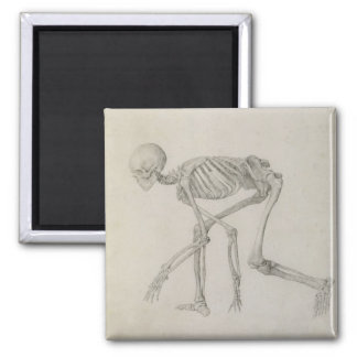 Human Skeleton: Lateral view in Crouching Posture, Square Magnet