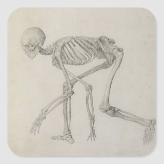 Human Skeleton: Lateral view in Crouching Posture, Square Sticker