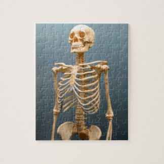 human skeleton jigsaw puzzles | zazzle.co.nz, Skeleton
