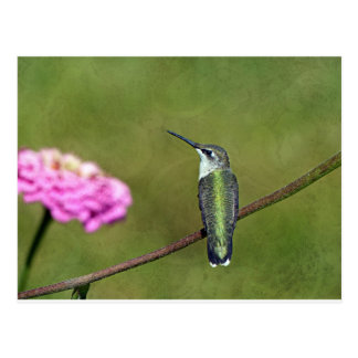 Hummingbird and Zinnia Postcard
