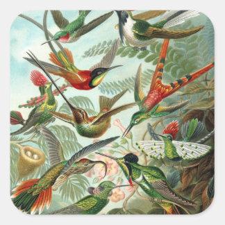 Hummingbird by Haeckel Square Sticker