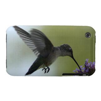 HummingBird iPhone 3 Covers