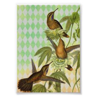 Hummingbird Digital Art Photograph