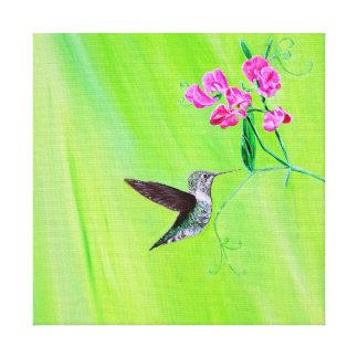 Hummingbird & Sweet pea Canvas Print