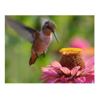 Hummingbird with Zinnias Postcard