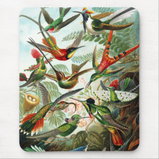 Hummingbirds by Ernst Haeckel Mouse Pad