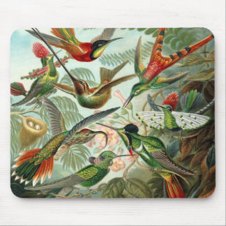 Hummingbirds by Ernst Haeckel, Vintage Birds Trees Mouse Pad